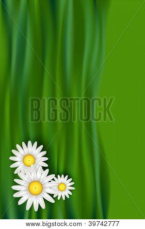 Chamomile Flowers Illustration Design