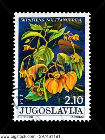 Yugoslavia - Circa 1975 : Cancelled Postage Stamp Printed By Yugoslavia, That Shows The Impatiens No