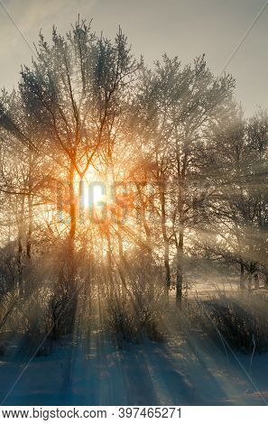 Winter landscape, winter forest trees with sunset light breaking through the winter tree branches. Winter forest sunny scene, winter sunrise in the winter forest