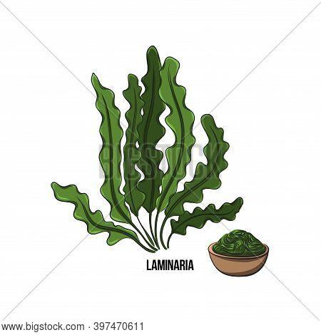 Algae Set - Laminaria. Green And Red Edible Algae. Black And Multi-colored Sketch On A White Backgro