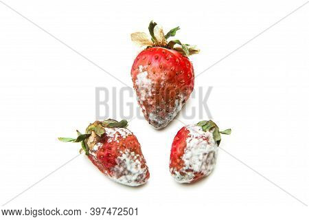 Three Mouldy Strawberries. Rotten And Uneatable. Isolated On White Background.
