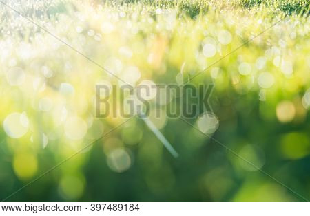 Defocused Blurry Bokeh Of Raindrops On Green Grass Field With Sunrise Shining The Morning, Green Bok