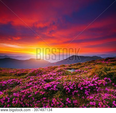 Fantastic scene with flowering hills illuminated by the sunset. Location place Carpathian mountains, Ukraine, Europe. Idyllic photo wallpaper. Magic nature photography. Discover the beauty of world.