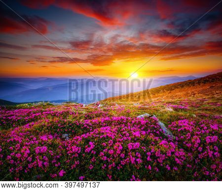 Attractive scene with flowering hills illuminated by the sunset. Location place Carpathian mountains, Ukraine, Europe. Idyllic photo wallpaper. Magic nature photography. Discover the beauty of world.
