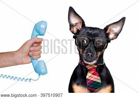 Prague Ratter Dog On The Phone Or Telephone Isolated On White Background