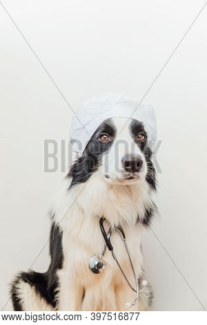 Puppy Dog Border Collie With Stethoscope Dressed In Doctor Costume Isolated On White Background. Lit