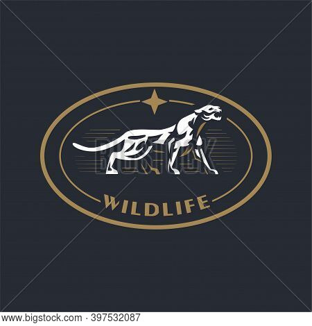 A Puma Or Panther Walks And Growls. Stylized Vector Illustration.