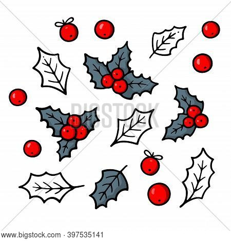 Holly. Traditional Christmas Symbol. Winter Theme. Evergreen Leaves With Red Berries. New Year Decor