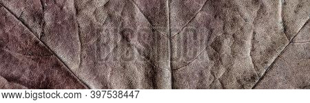 Leaf Surface Close-up. Panoramic View Of A Dry Maple Leaf With A Beautiful Texture. Leaf Surface Clo