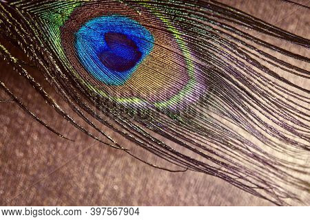 Multi-colored Peacock Feather. Peacock Feather On A Background Color Cafe Au Lait .abstract Backgrou