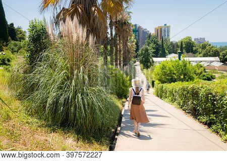 Pampas Grass Or Cortaderia Selloana Or Cortaderia Cello Or Cortaderia Dioecious Next To The Walking