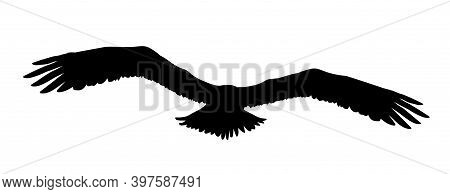 Black Silhouette Eagle, Falcon, Hawk Or Orel Isolated On White Background. A Large Predator Soar In
