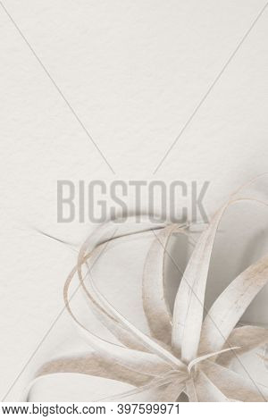 White tillandsia plant on a white background