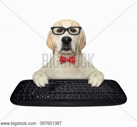 A Dog Manager In A Red Bow Tie And Glasses Is Typing On A Keyboard Of A Desktop Computer. White Back