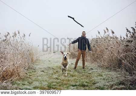 Man Throwing Stick For His Dog. Pet Owner With Labrador Retriver Are Playing During Foggy Autumn Day
