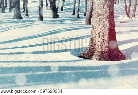 Christmas morning in the forest, Christmas landscape. Winter landscape, winter forest trees and white snowdrifts on the foreground, winter sunrise in the forest during the snowfall