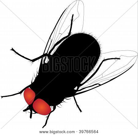 House fly vector silhouette. Fully editable