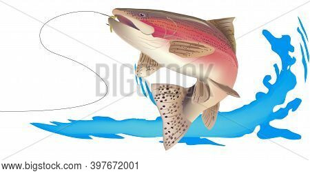 Predatory Salmon Trout Freshwater Fish Predatory Salmon Trout Freshwater Fish