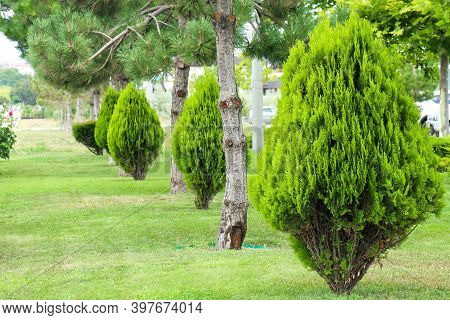 Lawn With Cut Grass And Trimmed Trees