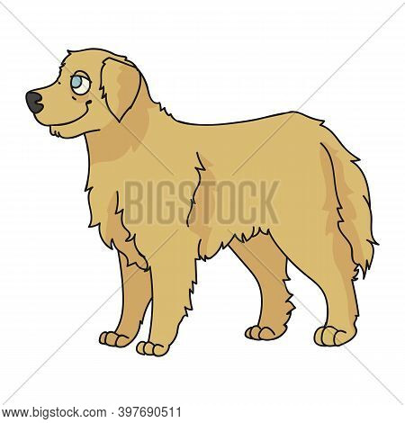 Cute Cartoon Golden Retriever Dog Breed Vector Clipart. Pedigree Kennel Doggie Breed For Dog Lovers.