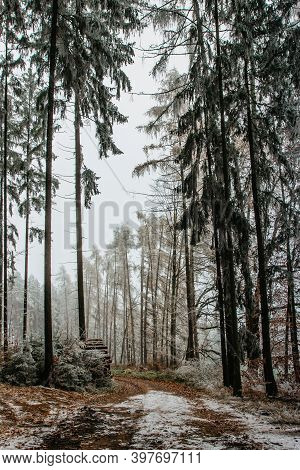 Forest Path With First Fresh Snow. Beautiful Snowy Trees. Cold Winter Day In Countryside. Frozen Tre