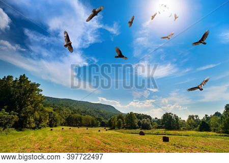 Flock Of Menacing Circling Turkey Vultures Hover High Up In The Sky