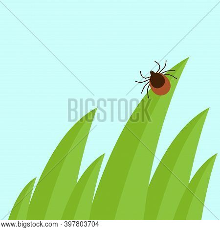 Mite In The Tall Green Grass Flat Vector Illustration, Mite Hiding In The Grass, Tick-borne Mite Col