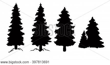 Set Of Vector Christmas Tree Silhouettes, Traced Outline, Detailed Silhouette Of Fir Trees. Pine Tre