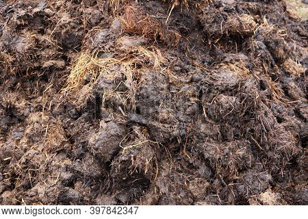 Pile Of Smelly Pet Dung. A Pile Of Manure On The Farm.
