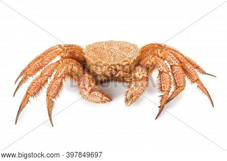 Fresh Cooked Crab Quadrangular Hairy Or Red Crab Isolated On White Background