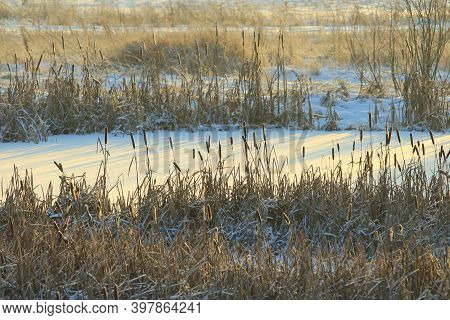 Cattail Lit By The Sun Against The Background Of A Snow-covered Pond. Eco Natural Background For Fes