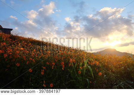 Blurred Silhouette Sunrise Over Cosmos Flower Field Against Blue Sky In The Morning With Shadow On H