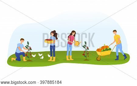 Men And Women Farmers Or Gardeners Planting, Caring And Picking Tomato Harvest. Happy Gorup Of Peopl