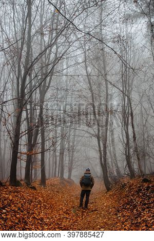 Man Walking In Scary Misty Forest. Colorful Landscape With Foggy Forest, Orange Foliage In Fall. Fai