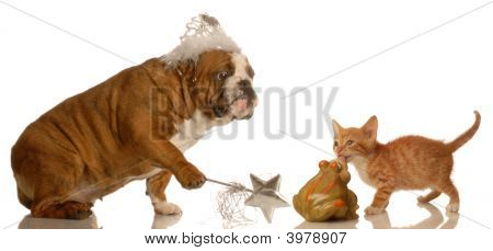 Bulldog Granting Wish To Kitten Kissing Toad