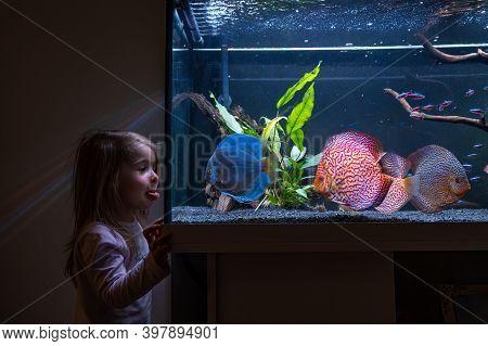 2-3 Year Old Child Watching Fish Swiming In Big Fishtank, Aquarium. Hobby Concept
