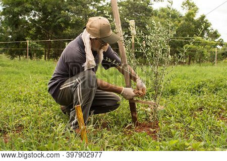 Caucasian Farmer Kneeling Down Planting A Tree And Using Traditional Techniques To Ensure The Health