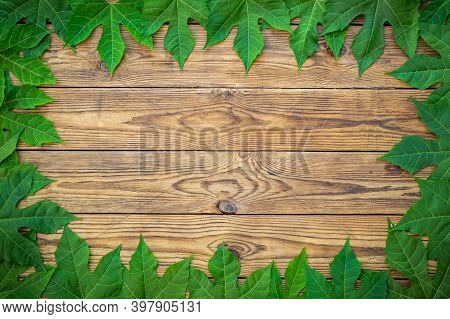 Green Leaf Frame Over Old Wooden Texture Background. With Space For Text. Top View.