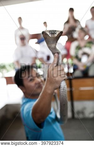 Pattaya, Thailand - February 9, 2014: Snake Show, Performer Play With Cobra During A Show In Pattaya
