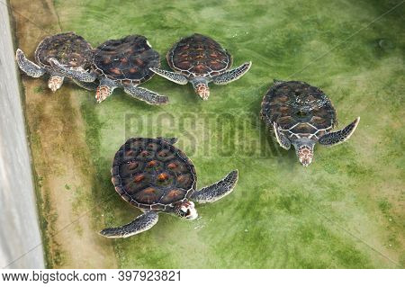 Turtles In The Water In The Botanical Garden