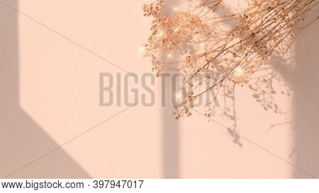 Dried flower window shadow floral image background