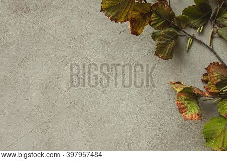 Top View Of Dried Flowers And Leaves On A Gray Concrete Background. Copyspace. Concept Of Autumn Sim