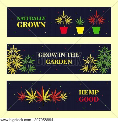 Vivid Banner Designs With Marihuana Bush And Leaves. Colorful Ganja And Text On Dark Background. Hem