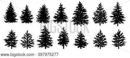 Set Of Black Silhouettes Of Christmas Trees. Fir Tree. Pine Tree. Spruce Tree.