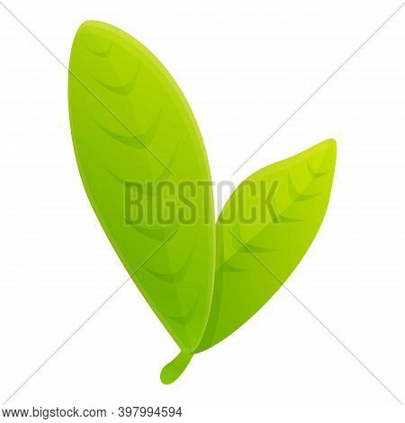 Bergamot Green Leafs Icon. Cartoon Of Bergamot Green Leafs Vector Icon For Web Design Isolated On Wh