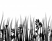 Grass silhouettes ornate on the white background poster