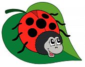 Cute ladybug on green leaf - vector illustration. poster