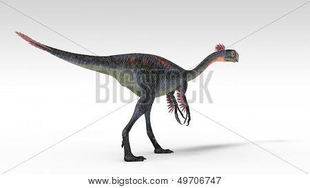 gigantoraptor isolated on white