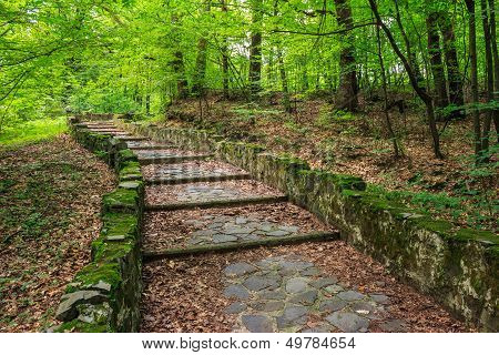 Winding Stone Steps With Foliage Horizontal