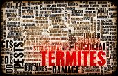 Termites Concept as a Pest Control Problem poster